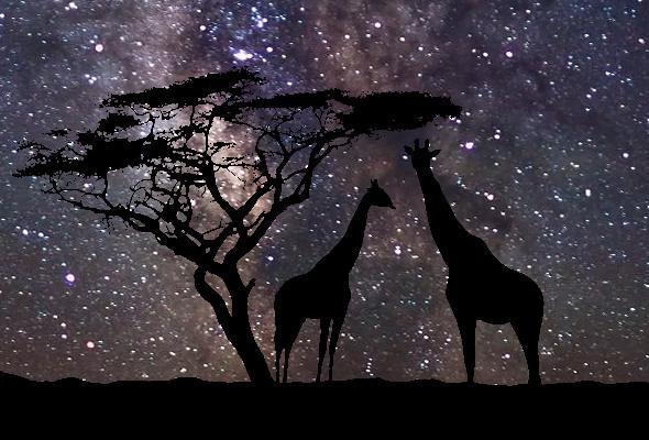 Giraffe Stars